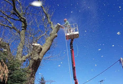 Tracked spider cherry picker set in road helping tree surgeon to dismantle a dangerous tree.